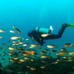 【攻略】菲律宾长滩岛体验潜水(深潜)促销中-450元减50元优惠券