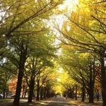 6所日本超美大学,各类型建筑也值得参访